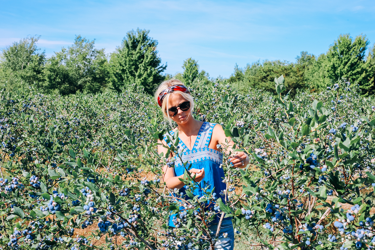pentwater_blueberry-8