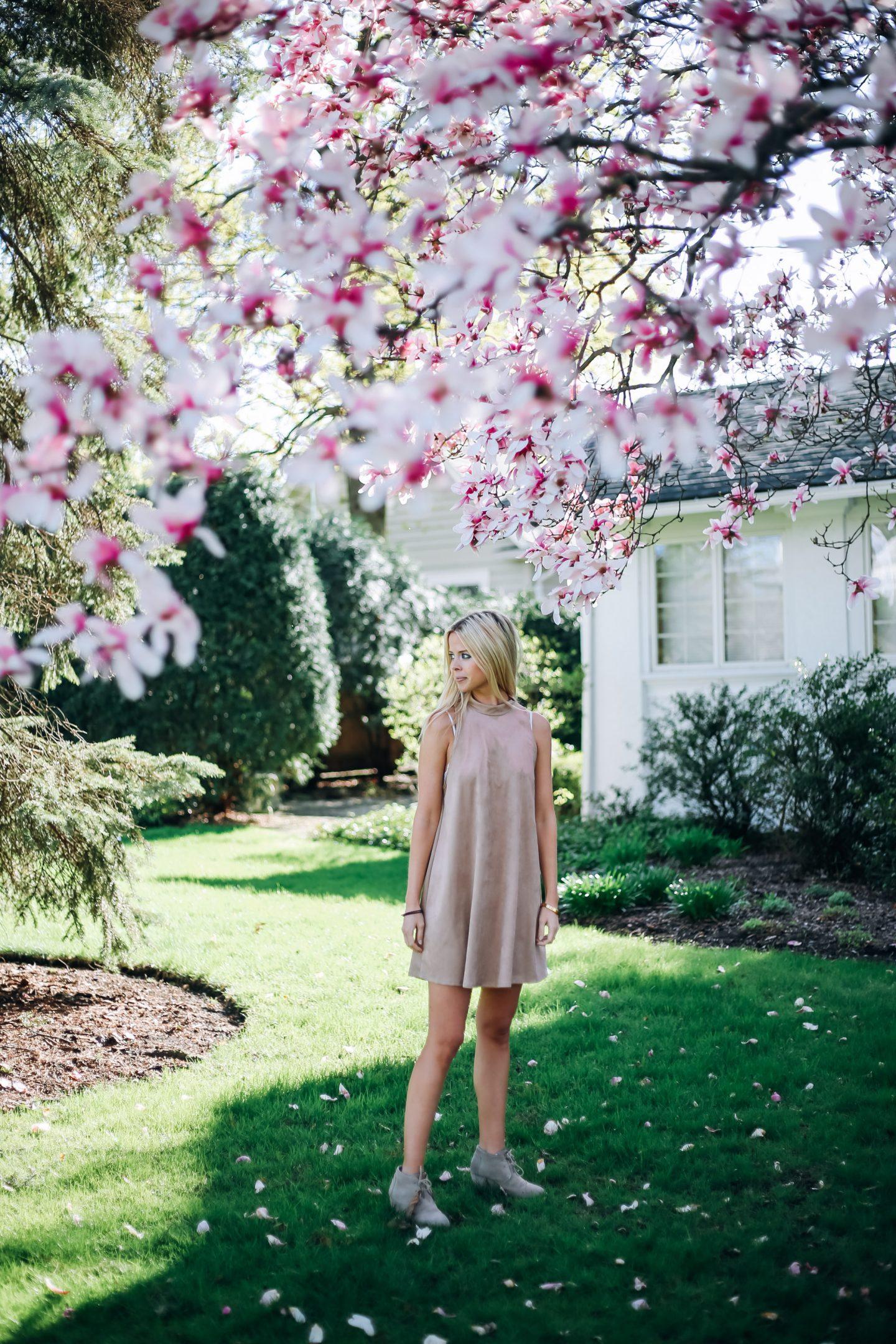 Magnolia season - Wonder & Awe
